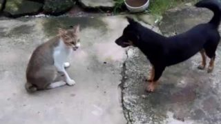 Funny Cat and Dog fighting – chats drôles et chiens Vidéos